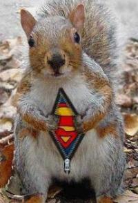 Superman Squirrel